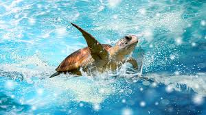 sea turtle wallpaper 6809022