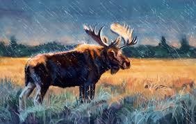 s moose hd wallpapers desktop