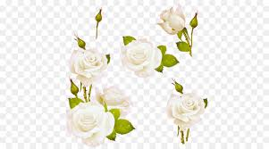 rose love flowers png 500
