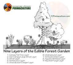 subtropical permaculture plant list