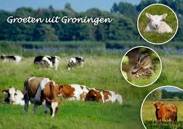 Natuurlijke Foto Workshop Fotografie Groningen - Natuurlijk Noorden