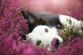 dog photography animals cute puppy friends flowers autumn dogs ...