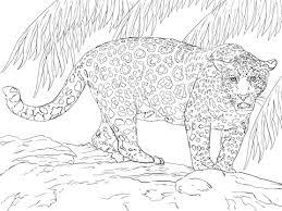 Grote Jaguar Kleurplaat Gratis Kleurplaten Printen