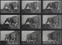 Eadweard Muybridge | Michael Hoppen Gallery