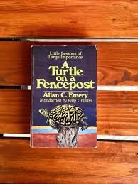 A Turtle On A Fencepost Women Who Win Books Books On Carousell