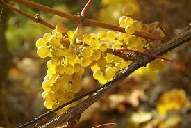 les vins qui nous touchent les papilles