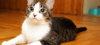 cat urine odor from wood floorboards