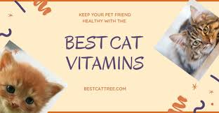 Best Cat Vitamins 2020 Reviewed and Compared - My Pet Likes It