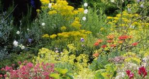 time to plant perennials but choose