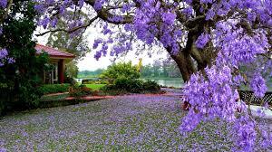 flower garden wallpaper hd hd