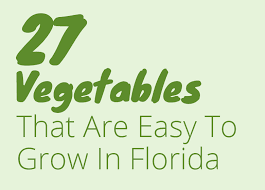 27 easy vegetables to grow in florida