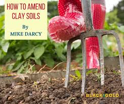 black gold how to amend clay soils