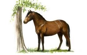 native horse breeds of brin