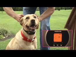 Motorola Wireless Dog Fence Youtube
