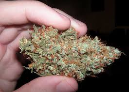 AK47 Weed- Hybrid Strain - Legalize it. We Think So