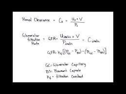 renal clearance glomerular filtration
