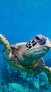 turtle hd wallpapers for android apk