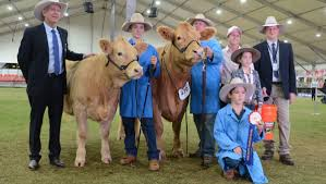 Queenslander outclasses all in Charolais ring | Queensland Country Life |  Queensland