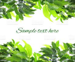 Fence Green Leaves Template Fresh Plant Frame Border Stock Photo Download Image Now Istock