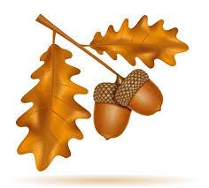 autumn oak acorns with leaves vector illustration - Download Free Vectors,  Clipart Graphics & Vector Art