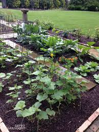 Kitchen Garden Basics How To Start Growing Food Today