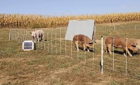 Electric Fence For Pastured Pigs Hogs Premier1supplies