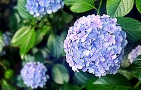 اجمل 10 زهور نادرة في العالم اكثر الزهور الجميلة ندرة في العالم