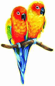 Amazon Com Love Birds Sun Conure Parakeets Perched Design Full Color Vinyl Decal Sized For Stainless Steel Tumbler Everything Else