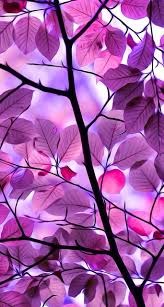 purple wallpaper and background image