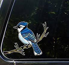 Amazon Com Blue Jay Bird Perched On Branch Stained Glass Style Vinyl Car Decal Yadda Yadda Design Co 6 W X 4 5 H Kitchen Dining