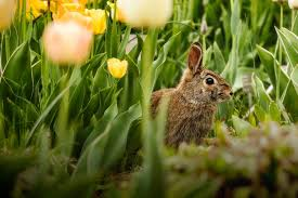 3 ways to keep rabbits out of your garden