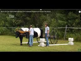 05 21 20 The 2020 Uvm Extension 4 H Livestock Program On Across The Fence Youtube