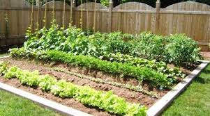 planting a vegetable garden tips images
