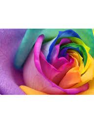 سعر خلفية على شكل أزهار بألوان قوس قزح متعدد الألوان 3 X 3 متر فى