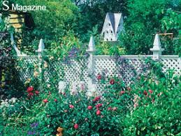 Gardening A White Woven Fence Is A Perfect Backdrop To Mixed Border Plants Express Co Uk