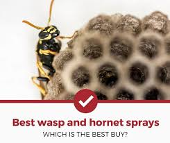 top 5 best wasp and hornet sprays