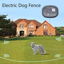 Top 5 Best Rated Electric Dog Fence For Your Pet Safety Dog Fence Reviews