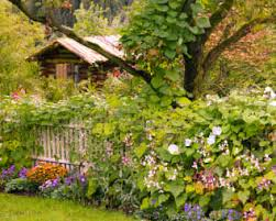 10 Great Natural Garden Screening Ideas Natural Home