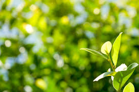 natural green plants background or