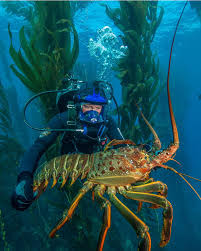 TIL that lobsters can be gigantic ...