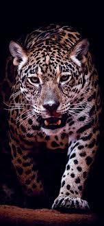 stunning jaguar hd wallpaper 1080 2340