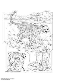 Kleurplaat Cheetah Kinderen Leren Terwijl Ze Kleuren