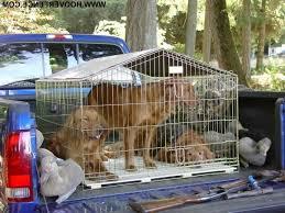 The Different Types Of Dog Fences Mardo Mak