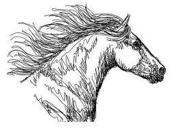 1 Januari 2013 Opent Stal Horsetrust Haar Deuren In Stroe Bokt Nl