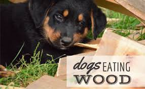 Dog Eating Wood How To Make Them Stop Caninejournal Com