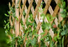 Trellis Ideas For Climbing Peas Planet Natural