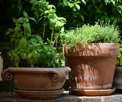 cleaning clay pots how to clean