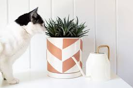 19 houseplants safe for cats and dogs