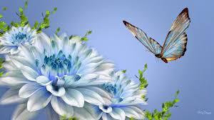 اروع صور الفراشات Hd لسطح المكتب