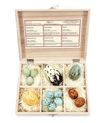 chocolate bird s eggs gift box edible
